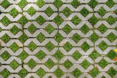 砖步行方式样式周围绿草 免版税图库摄影