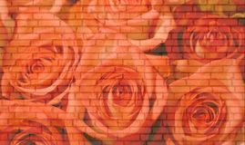 砖玫瑰墙壁 免版税图库摄影