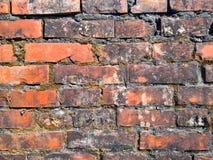 砖生苔墙壁 库存图片