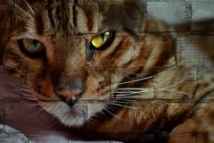 砖表面上的猫面孔 库存图片