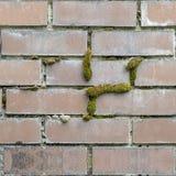 砖设置无缝的照片纹理与绿色青苔的 免版税库存照片