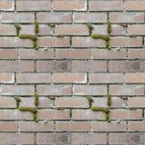 砖设置无缝的照片纹理与绿色青苔的 免版税库存图片