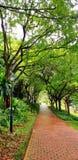 砖走道和灯岗位在公园绿色树有很多在雨以后 免版税库存图片