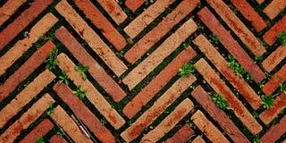 砖路面在罗马 有草的车行道 年龄 图库摄影