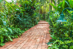 砖道路在一个热带庭院里 库存图片