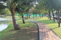 砖道路在沿湖的棕榈树下 图库摄影