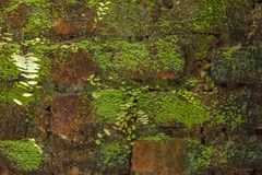 砖青苔墙壁 免版税库存图片