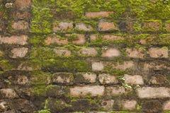 砖青苔墙壁 库存照片