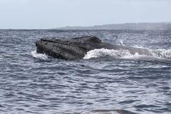 破坏在毛伊watersa的强有力的驼背鲸在Lahaina附近 免版税图库摄影