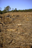 破坏森林 免版税库存图片