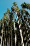 破坏森林 库存照片
