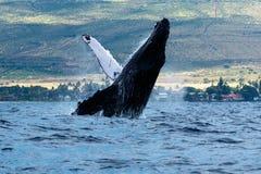 破坏frederick驼背声音sw鲸鱼的阿拉斯加 免版税图库摄影