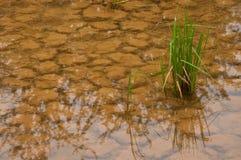破裂的土壤水 库存照片