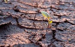 破裂的地球上的绿色叶子 免版税库存照片