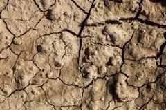 破裂的干燥陆运 库存照片