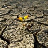 破裂的无生命的土壤 免版税库存图片