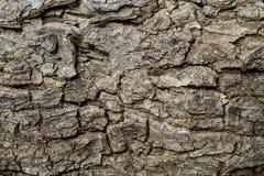 破裂的树皮特写镜头纹理照片 土气树皮特写镜头 橡木吠声样式 图库摄影