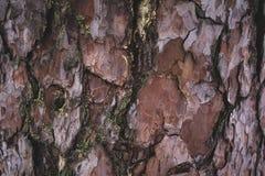 破裂的概略的棕色和紫色树皮背景 库存照片