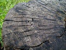破裂的老树桩边缘  免版税库存照片