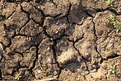 破裂的肮脏的土地充分的框架射击  破裂和干地球背景  免版税图库摄影