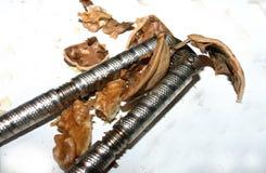 破裂的螺母 库存图片