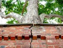 破裂结构树墙壁 免版税库存照片