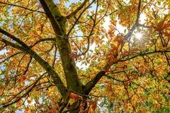 破裂通过秋天树的秋天太阳的五颜六色的看法 免版税库存照片