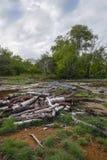 硫磺和树 免版税库存照片