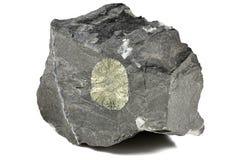 硫铁矿太阳 免版税库存照片