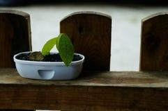 硬币和植物 库存图片