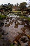 硬币在有反射的一个小日本池塘 免版税图库摄影