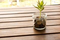 硬币绿色新芽在一张木桌上的 挽救的概念 免版税库存图片
