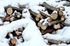 硬木和软木材日志堆  免版税库存图片
