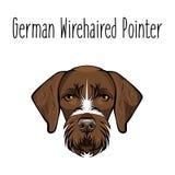 硬毛德国的指针 狗品种 布朗面对猎犬 也corel凹道例证向量 皇族释放例证