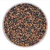 硬花甘蓝在培养皿的发芽种子 库存图片