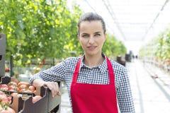确信的妇女身分画象与蕃茄条板箱的自温室 库存图片