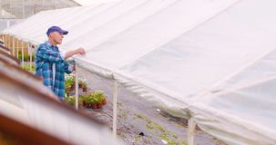 确信的男性花匠审查的盆的花植物 股票录像