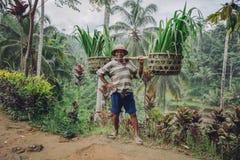 确信的老在他的肩膀的农夫运载的幼木 免版税图库摄影