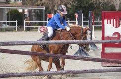 阻碍的马在障碍之前跳跃 免版税库存照片