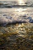 击碎在海草岩石的波浪 免版税库存照片