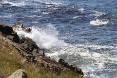 击碎在海岸的波浪 免版税库存照片