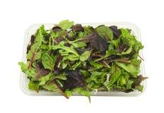 碗健康新鲜的春天沙拉 免版税库存照片