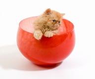 碗小猫 库存图片