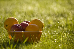 碗新鲜水果 免版税库存照片