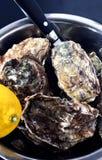 碗牡蛎 免版税库存照片