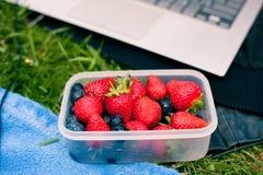 碗用在草的莓果 库存照片