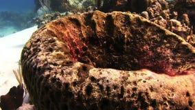 以碗的形式珊瑚 影视素材