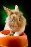 碗矮小的食物题头他的狮子兔子s 库存图片