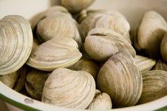 碗蛤蜊 免版税库存图片