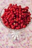 碗野草莓 免版税图库摄影